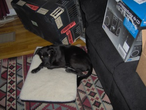 1st day in my forever home - Aug. 2009